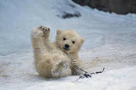 ijsbeer 2